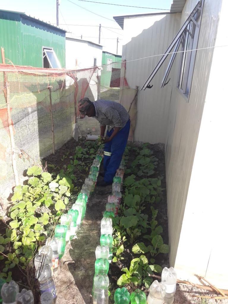 Urban farming in Mfuleni, Cape Town